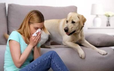Állatszőr allergia – Amikor a kiskedvenc okozza a kellemetlen panaszokat